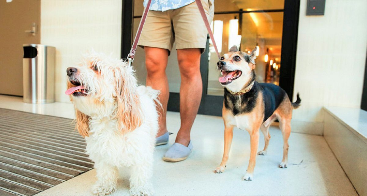 Animais em condomínios: como assegurar o bem-estar a todos